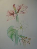 colourpencil, 50x65, 2010
